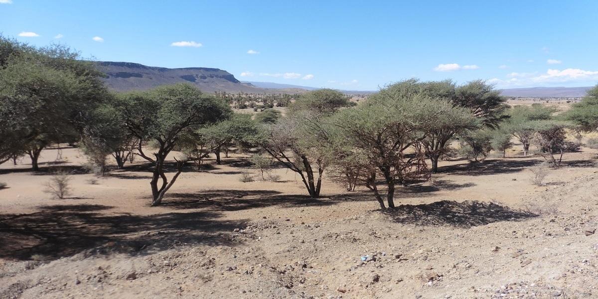 Ruta desde Marrakech al desierto de Merzouga 5 días
